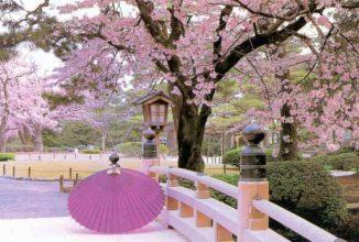 Nới lỏng chính sách Visa Nhật Bản